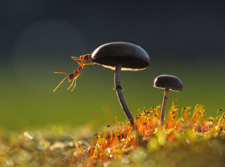 Mushrooms and Ants